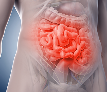Intestines highlighted in red